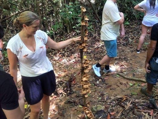 Wandeling in Phuket Regenwoud