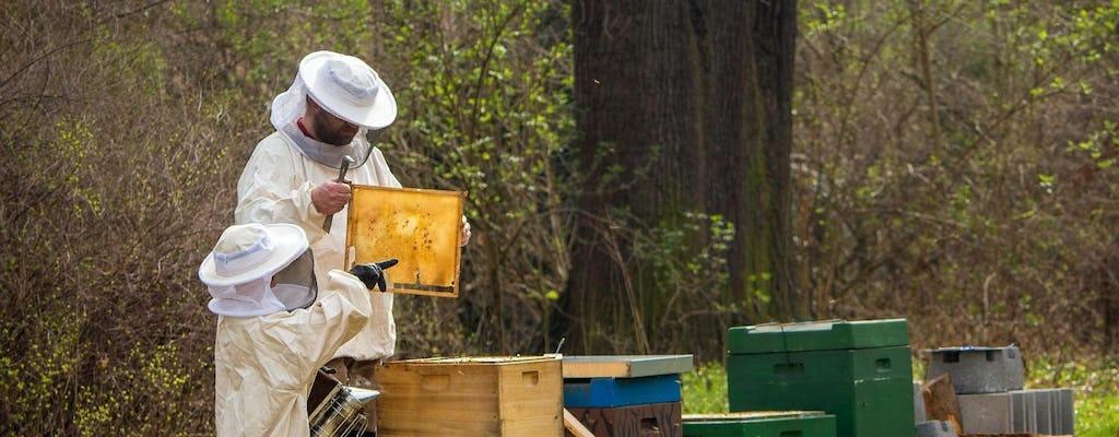 Wycieczka po pasiece pszczół z lokalną degustacją miodu