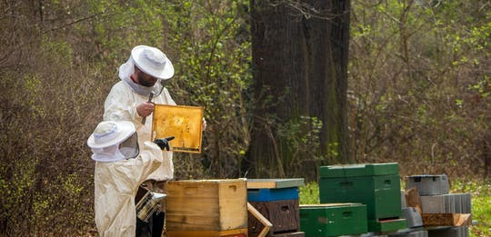 Bee apiary tour with local honey tasting