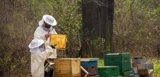 Tour dell'apiario delle api con degustazione di miele locale