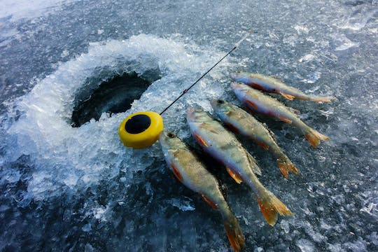 Learn about nature with the nature combo and go on a snowmobile safari with ice fishing and picnic