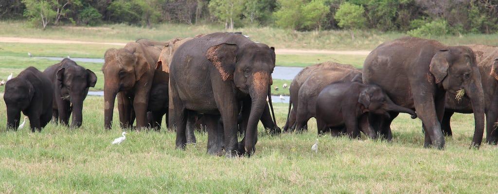 Gita di un giorno al Wilpattu National Park da Colombo
