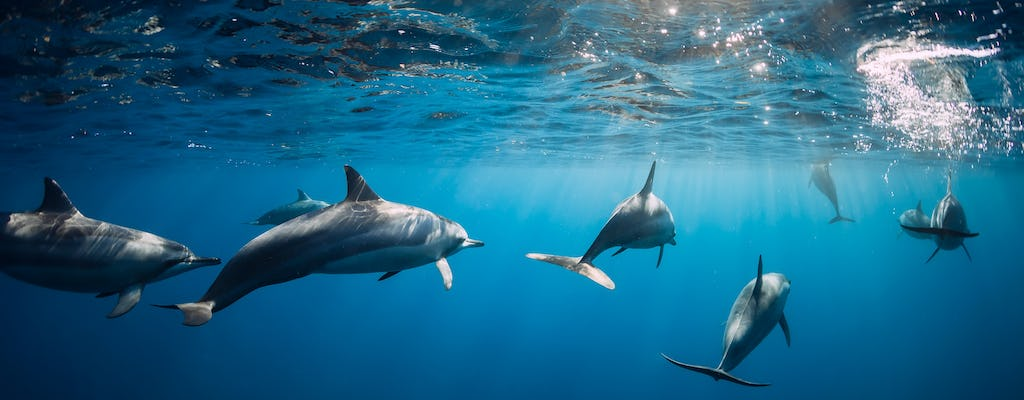 Mauritius dolphin watching, crater and temple tour