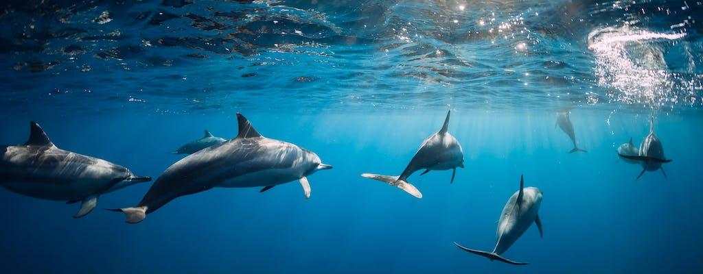 Маврикий дельфинами, кратер и экскурсии по храмам