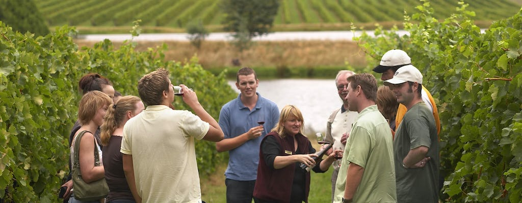Winery visit in La Rioja with tasting and traditional lunch from Logroño