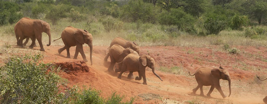 Tour di David Sheldrick Wildlife Trust