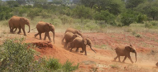 David Sheldrick Wildlife Trust tour