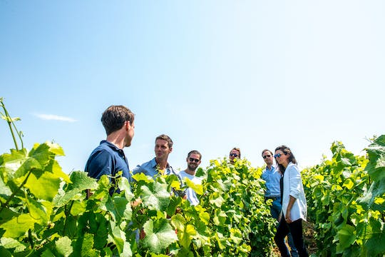Short day family grower tour and lunch from Epernay