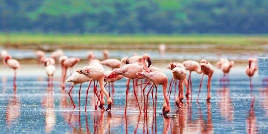 4-день Масаи Мара и озера Накуру сафари