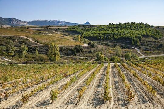 Visita a due cantine a La Rioja con pintxos di Bilbao