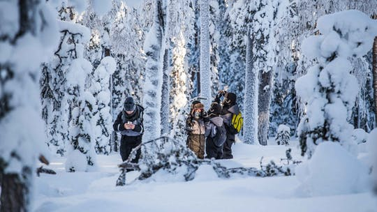 Explore the Finnish winter wilderness during a photography expedition