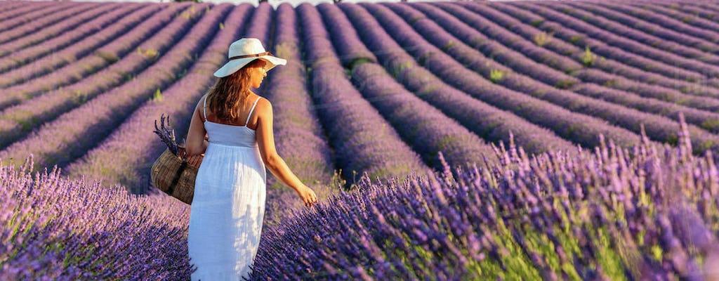 Provence en lavendel dagexcursie