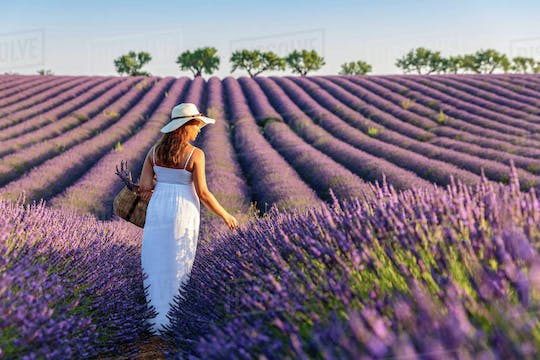 Provence and lavender full-day tour