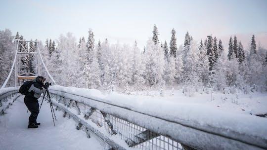 Explore as florestas árticas em uma excursão fotográfica