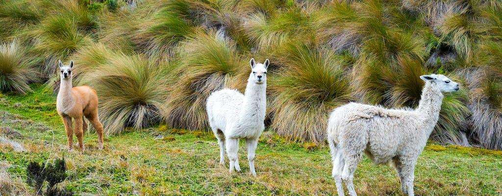 Tour del Parco Nazionale Cajas da Guayaquil o Cuenca