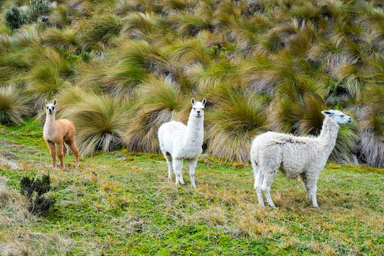 Cajas National Park tour from Guayaquil or Cuenca
