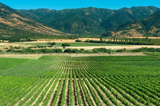 Colchagua Valley full-day wine tour from Santiago with tasting