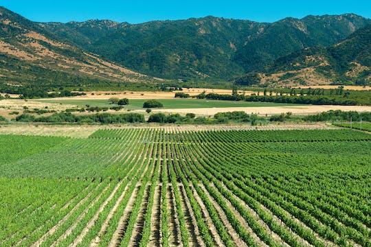 Ganztägige Weintour im Colchagua-Tal von Santiago mit Verkostung