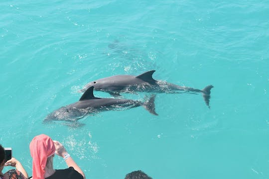 Key West dolphin watch and snorkeling sunset cruise