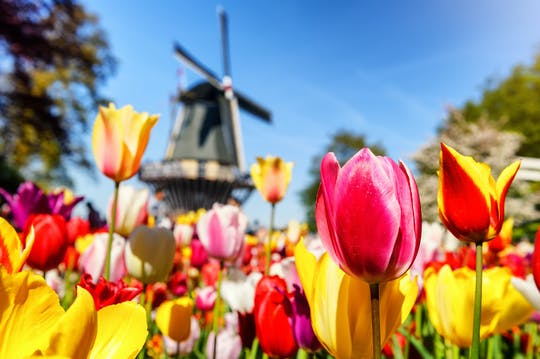 Keukenhof garden private luxury tour