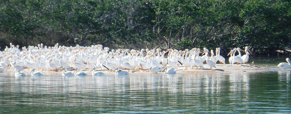 Spedizione della fauna selvatica e della spiaggia del parco nazionale delle Everglades