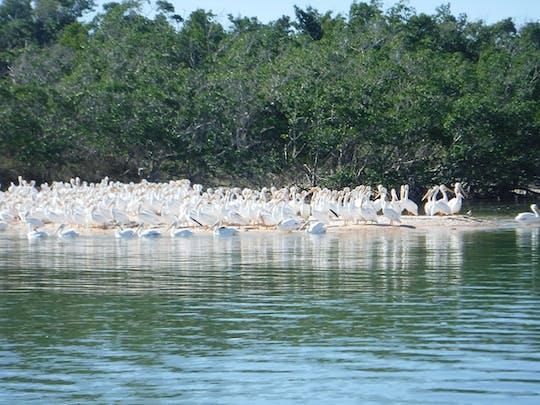 Vida selvagem do Everglades National Park e expedição à praia