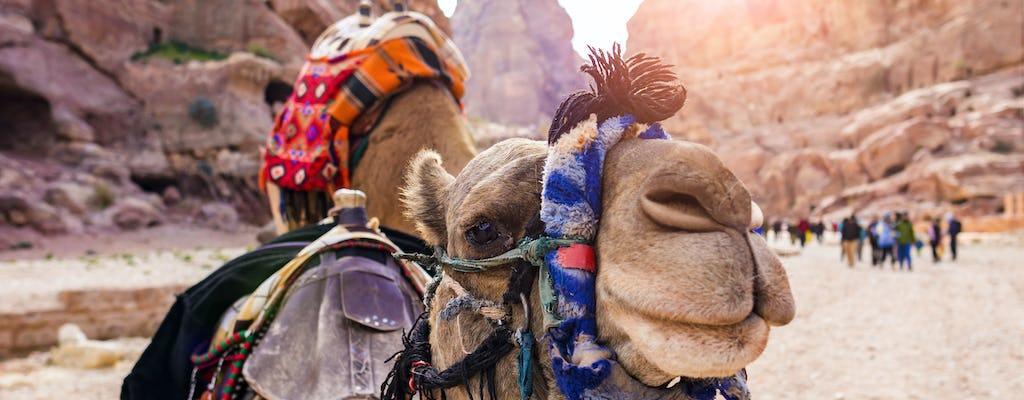 Safari de camelo com refeição beduoin em Eilat