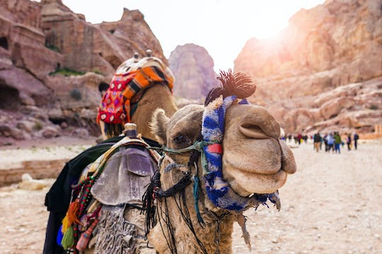 Camel safari with bedouin meal in Eilat