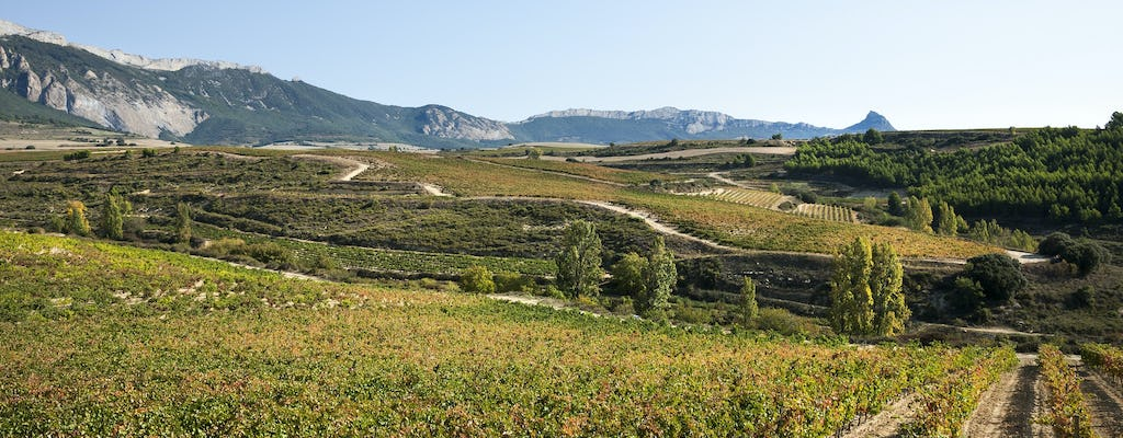 Winery visit in La Rioja with tasting and traditional lunch from Pamplona