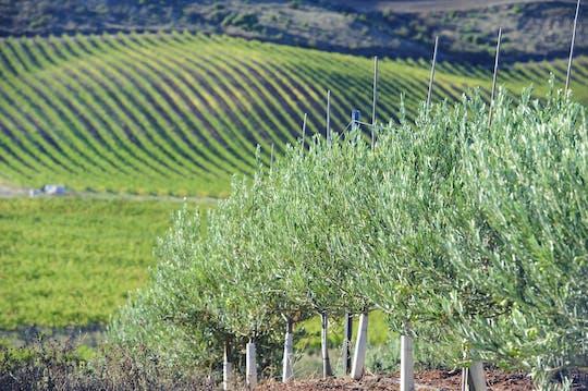 Experiencia en molino de aceite de oliva y visita a bodega en Navarra desde Pamplona