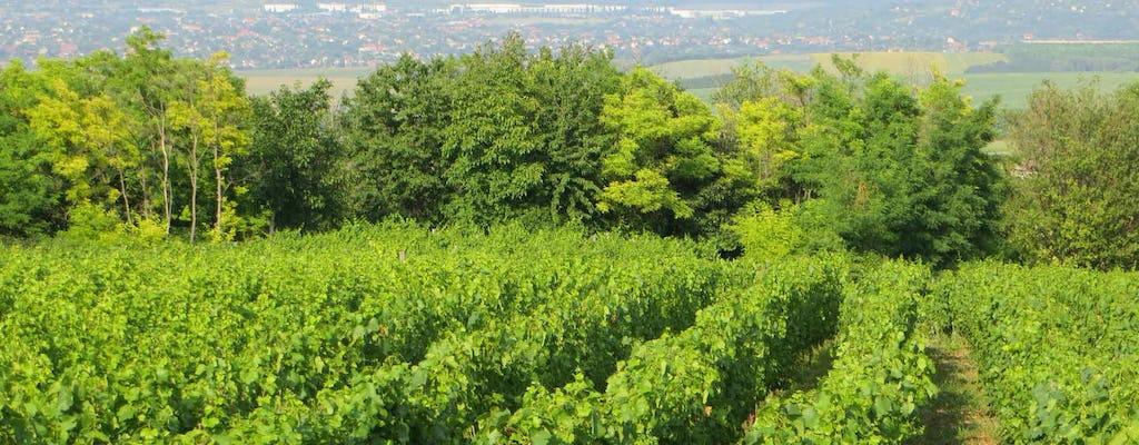 Visite privée des vins d'Etyek au départ de Budapest