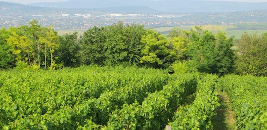 Etyek private wine tour from Budapest