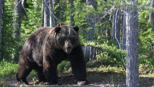 Арктических животных погружения