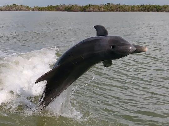 Everglades National Park: passeio de barco com golfinhos, observação de pássaros e vida selvagem