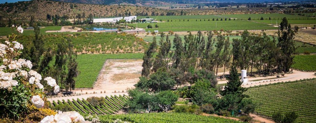 Visita guiada al Valle de Casablanca y viñedos Matetic con cata de vinos
