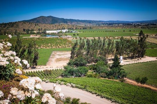 Visita guiada ao Vale de Casablanca e aos Vinhedos Matéticos com degustação de vinhos