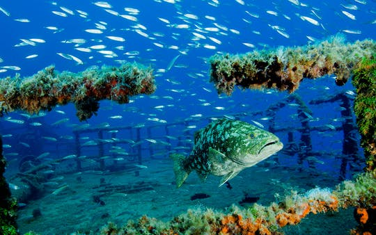 Porto Santo Diving Packages
