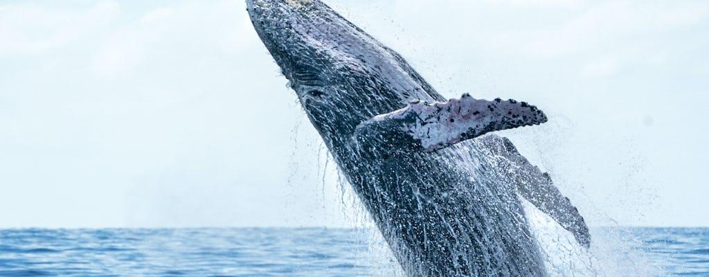 Bora Bora observação de baleias