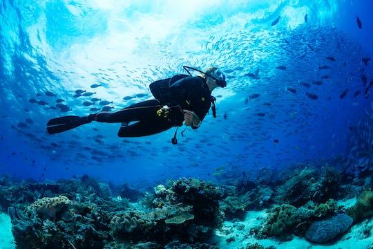 Von der Nordküste: Sansibar Taucherlebnisse