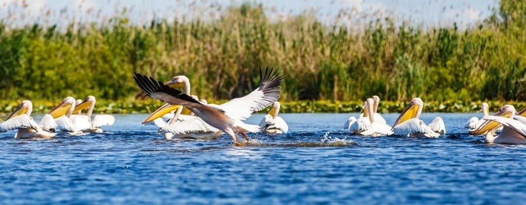 Full-day excursion to Danube Delta with boat trip and traditional fish