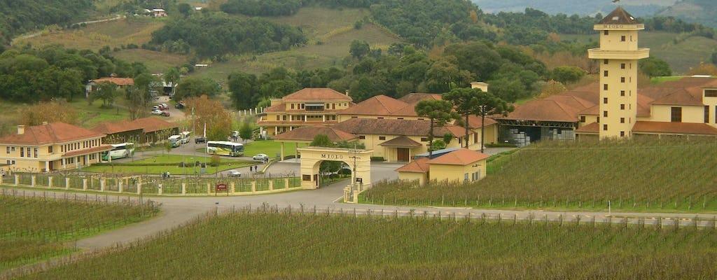 Tour del vino della Gran Reserva con degustazione