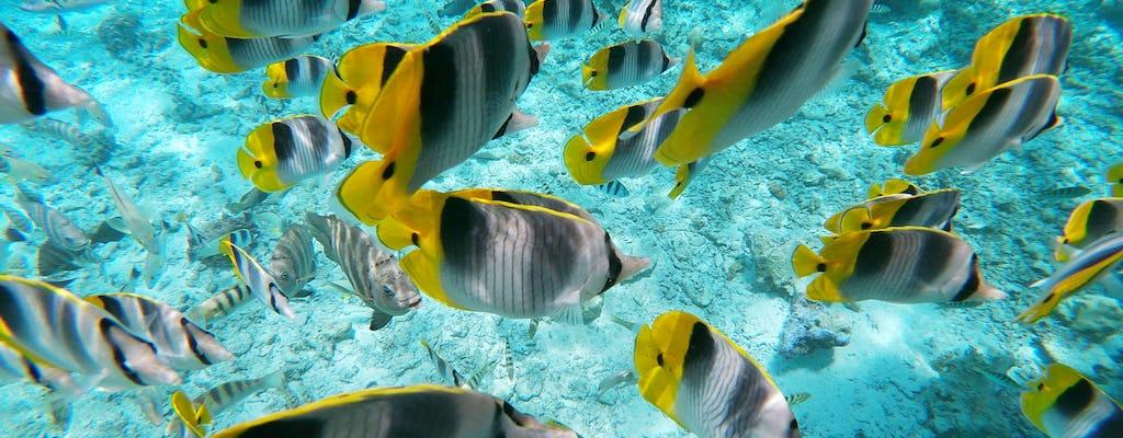 Bora Bora Glasbodenbootstour