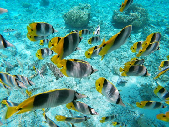 Tour en bote con fondo de cristal Bora Bora