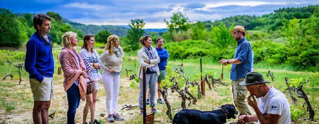 Традиционные французские оливковые опыт страды в лес Pastras