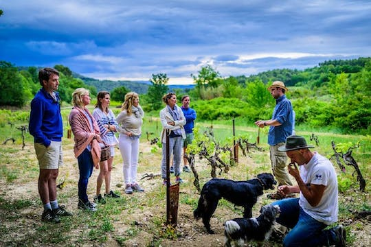Traditional French olive harvest experience at Les Pastras
