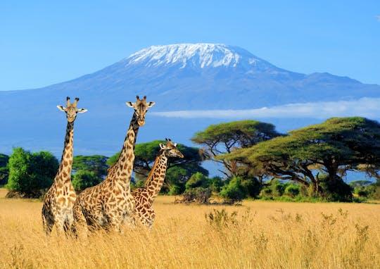 5 day safari tour of Kilimanjaro to Mombasa