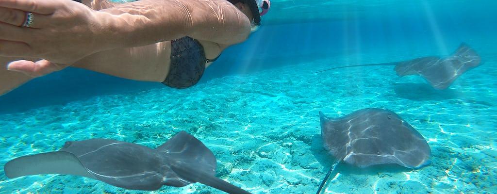 Lagoon small group snorkeling tour in Bora Bora
