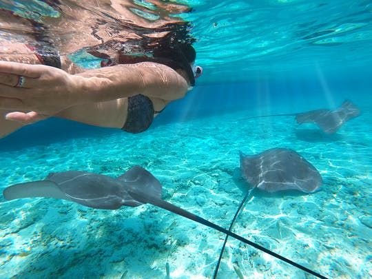 Lagoon small group snorkeling tour in Bora Bora