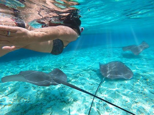 Tour de snorkel en grupos pequeños por la laguna en Bora Bora