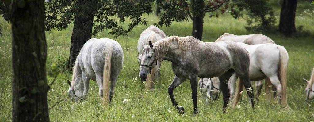 Экскурсия на целый день конного завода Липица и Карст сокровища